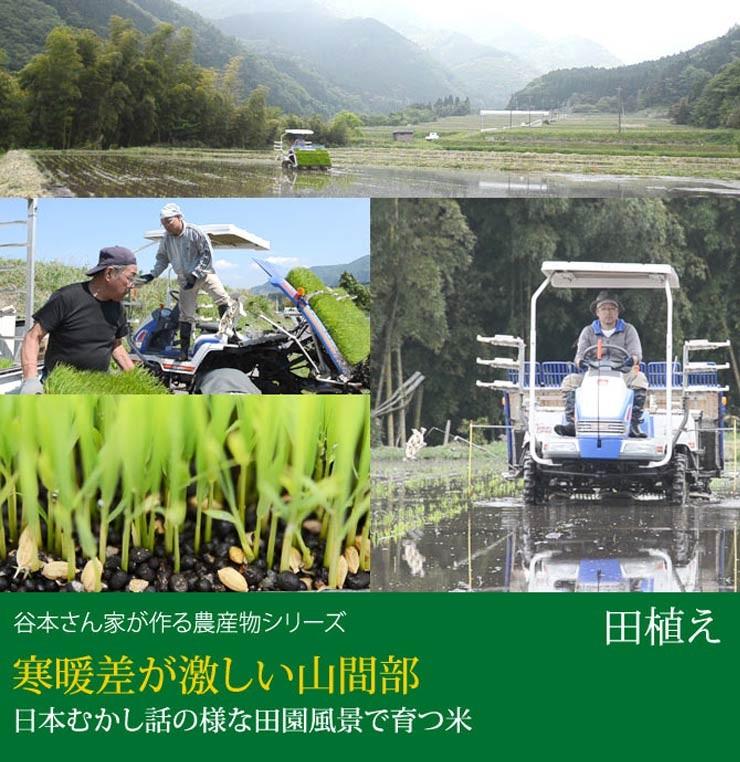 谷本さん家のお米シリーズ 田植え風景
