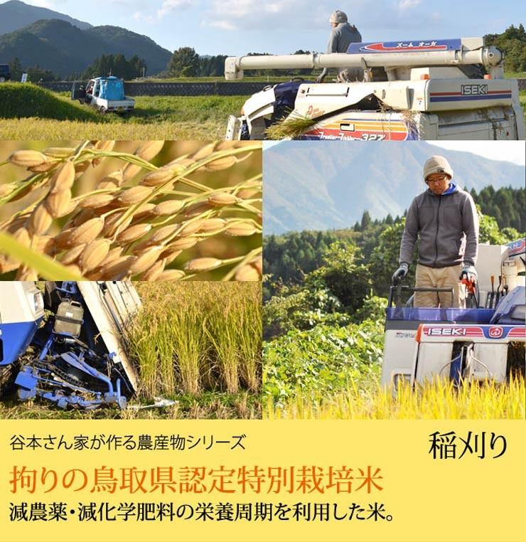 谷本さん家のお米シリーズ 稲刈り風景