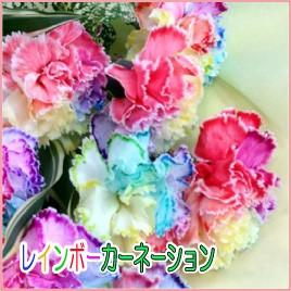 七色花弁のカーネーション レインボーカーネーション