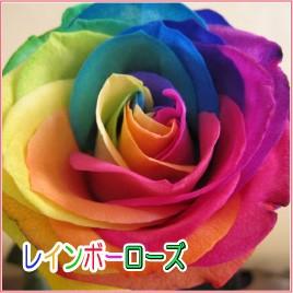 七色花弁のバラ レインボーローズ