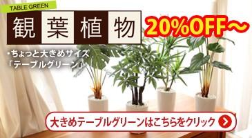 テーブル観葉植物