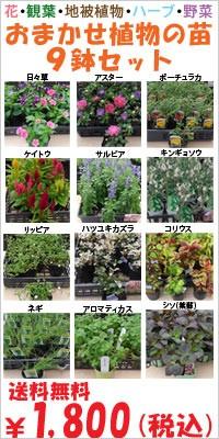 花苗,観葉植物苗,ハーブ苗,グランドカバー,野菜苗
