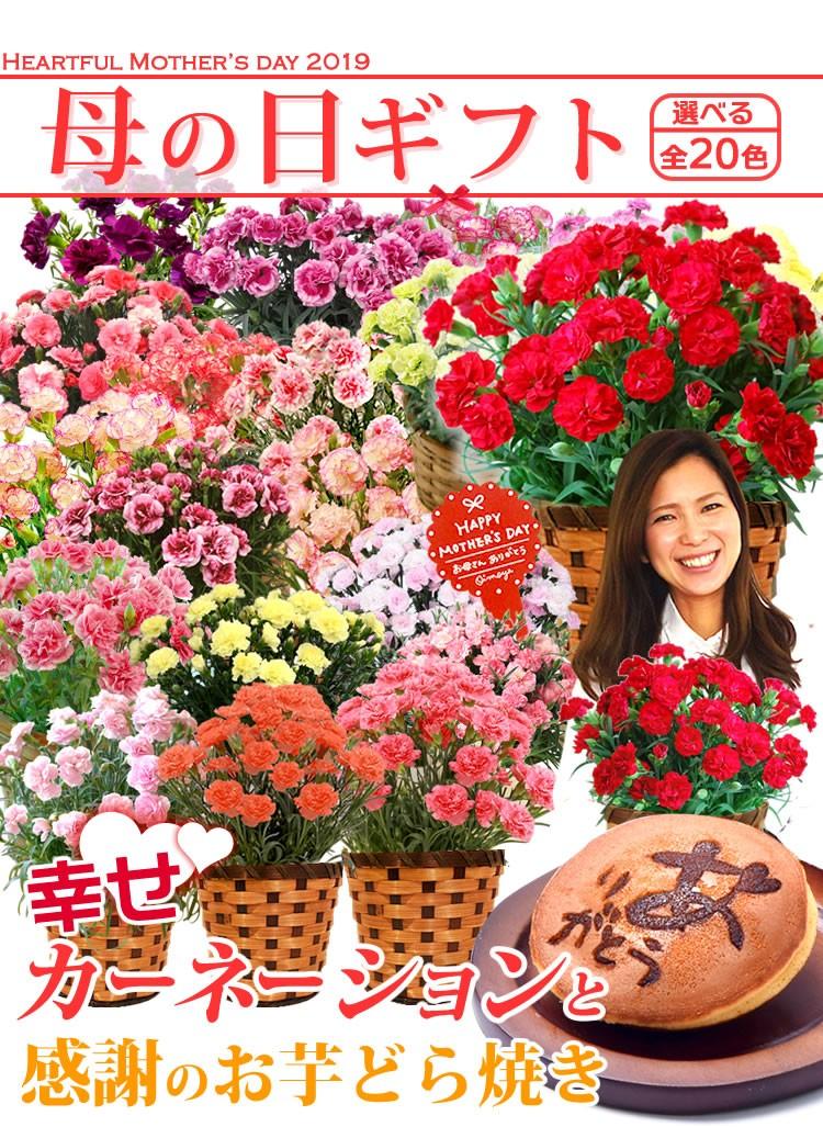 母の日2019 鉢花カーネーション
