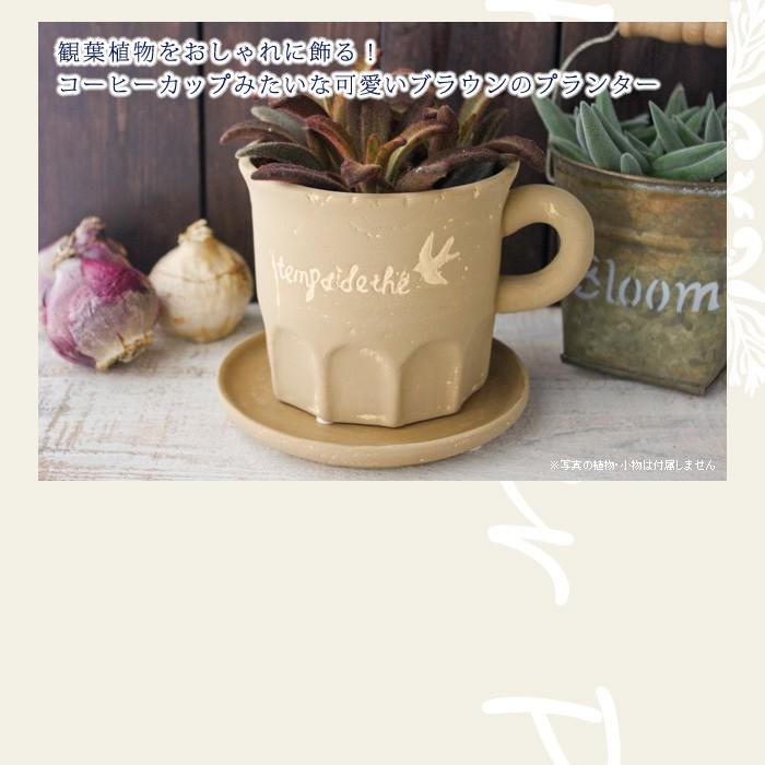 観葉植物をおしゃれに飾る!コーヒーカップみたいな可愛いブラウンのプランター