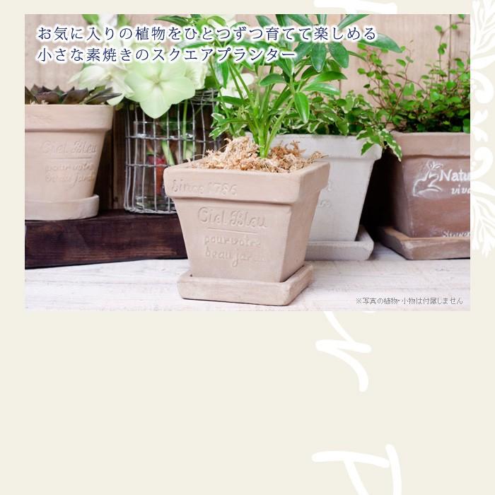 お気に入りの植物を一つずつ育てて楽しめる、小さな素焼きのスクエアプランター