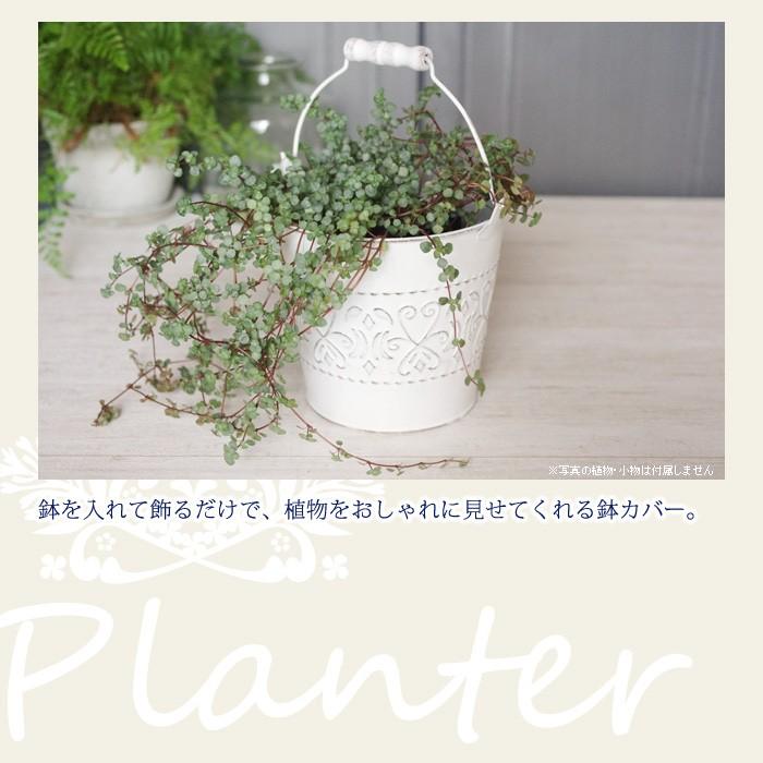 鉢を入れて飾るだけで、植物をおしゃれに見せてくれる鉢カバー