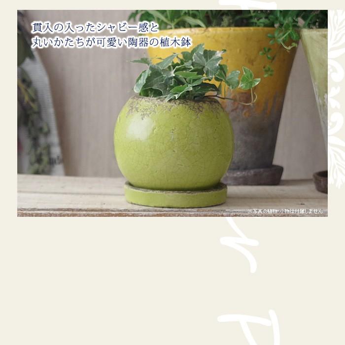 貫入の入ったシャビー感と丸いかたちが可愛い陶器の植木鉢