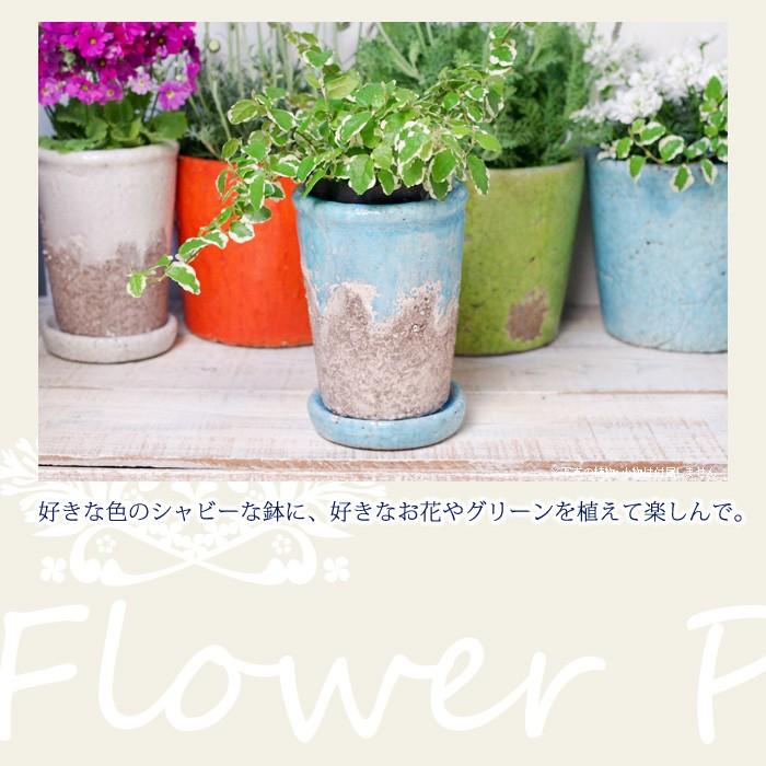 好きな色のシャビーな鉢に、好きなお花やグリーンを植えて楽しんで。