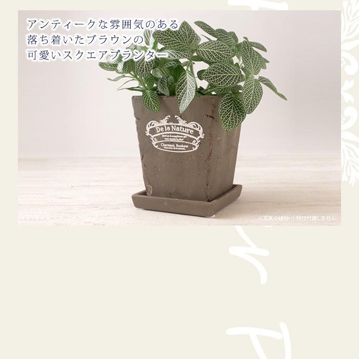 素焼きのスクエアの鉢を落ち着いたブラウンに仕上げた可愛いプランター(植木鉢)