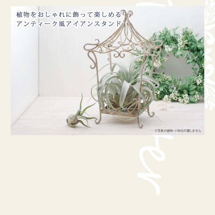 植物をおしゃれに飾って楽しめるアンティーク風アイアンスタンド