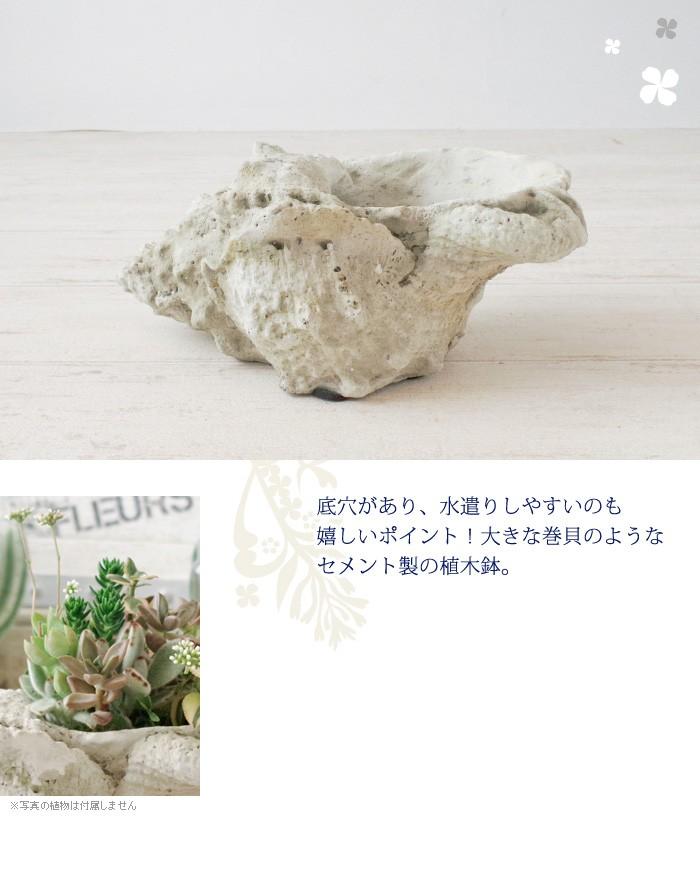 底穴があり、水遣りしやすいのも嬉しいポイント!大きな巻貝のようなセメント製の植木鉢