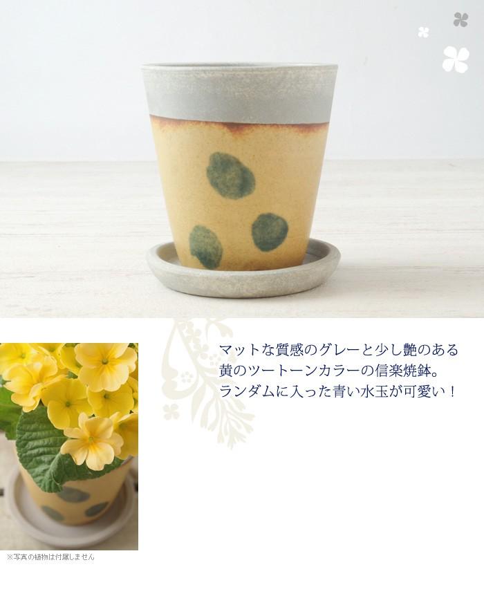 マットな質感のグレーと少し艶のある黄色のツートーンカラーの信楽焼鉢