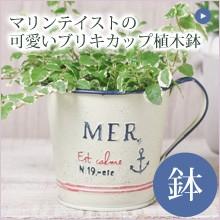 マリンテイストの可愛いブリキカップ植木鉢