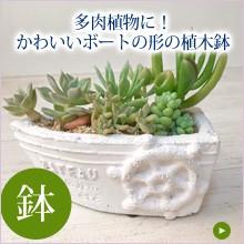 多肉植物に!かわいいボートの形の植木鉢