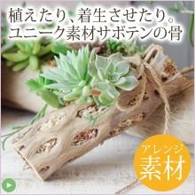 木材みたい質感のサボテンの骨。