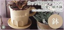 カップ型のカフェブラウンの可愛い植木鉢