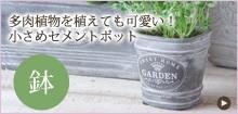多肉植物を植えても可愛い!小さめセメントポット