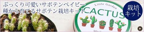 ぷっくり可愛いサボテンベイビー。種から育てるサボテン栽培キット