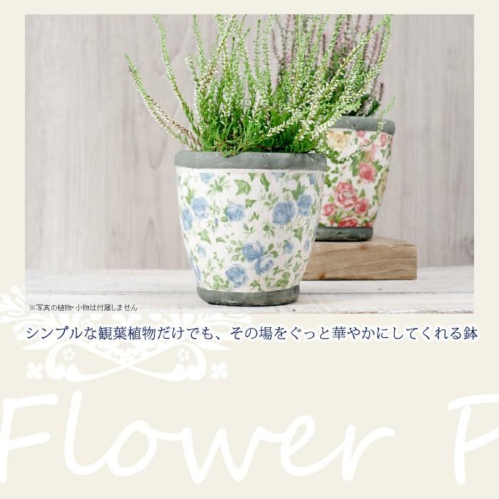 シンプルな観葉植物だけでも、その場をぐっと華やかにしてくれる鉢