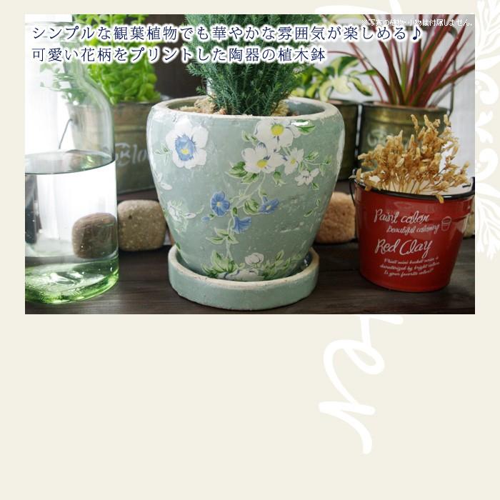 シンプルな観葉植物でも華やかな雰囲気が楽しめる♪可愛い花柄をプリントした陶器の植木鉢