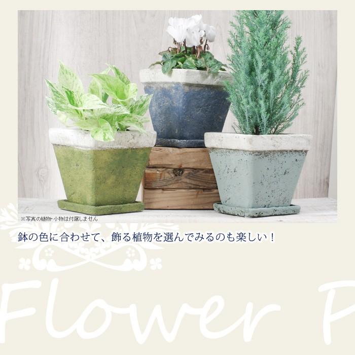 鉢の色にあわせて、飾る植物を選んでみるのも楽しい!