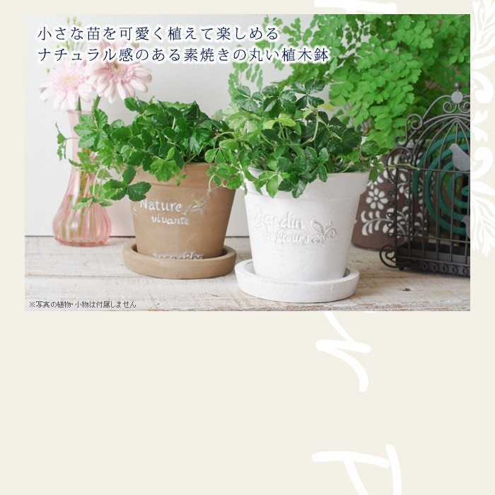 小さな苗を可愛く植えて楽しめる。ナチュラル感のある素焼きの丸い植木鉢