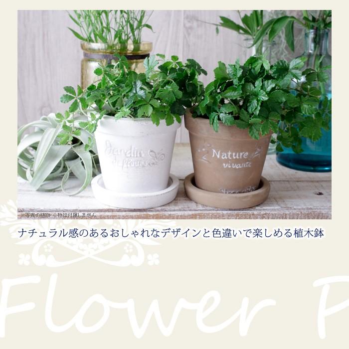 ナチュラル感のあるおしゃれなデザインと色違いで楽しめる植木鉢