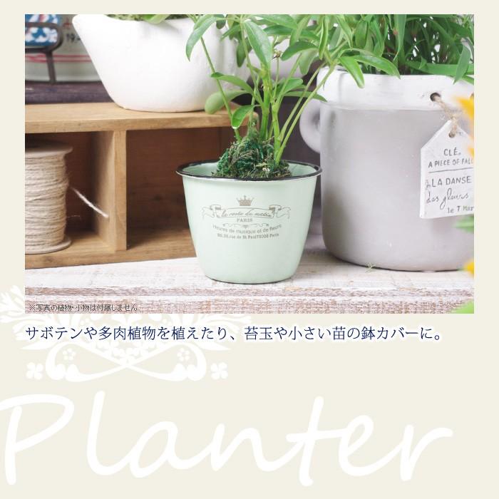 サボテンや多肉植物を植えたり、苔玉や小さい苗の鉢カバーに。