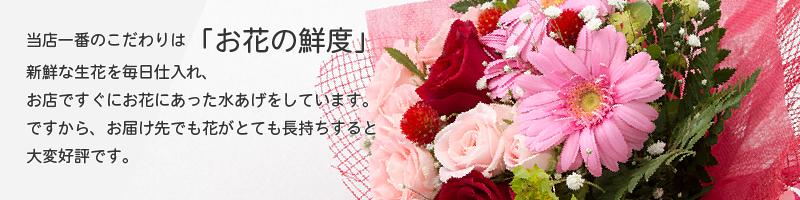 フラワーショップサンドロットの一番のこだわりは「お花の鮮度」。新鮮な生花を毎日仕入れ、お店ですぐにお花にあった水あげをしています。ですから、お届け先でも花がとても長持ちすると大変好評です。