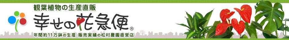 観葉植物生産一筋36年 幸せの花急便 年間15万鉢の生産・販売実績の松村農園直営店
