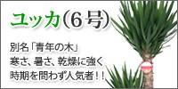 ユッカ(6号)