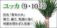 ユッカ(9・10号)