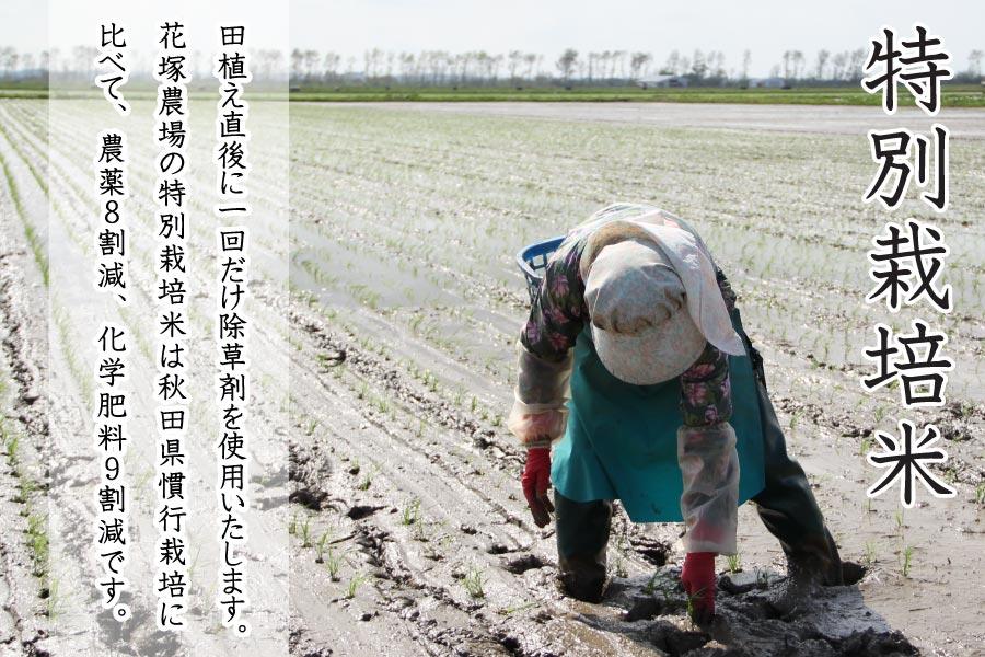 あきたこまち特別栽培米