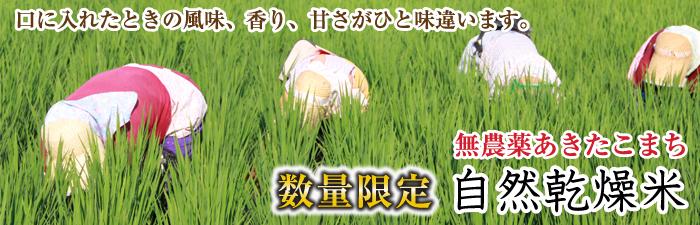無農薬あきたこまち 自然乾燥米