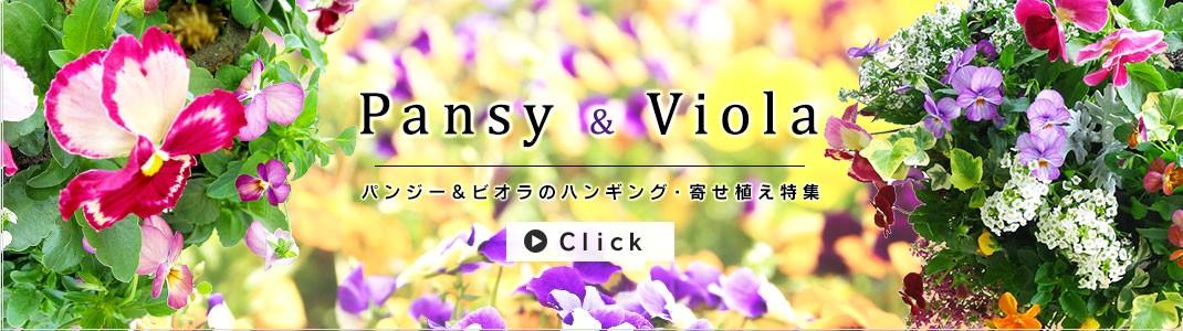 花うるるの「パンジー&ビオラのハンギング&寄せ植え特集」