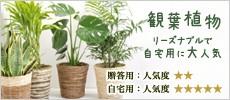 観葉植物 自宅用に人気