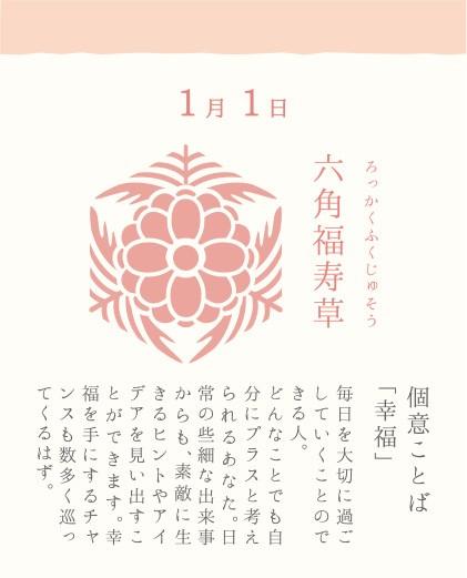 1月1日 六角福寿草(ろっかくふくじゅそう)