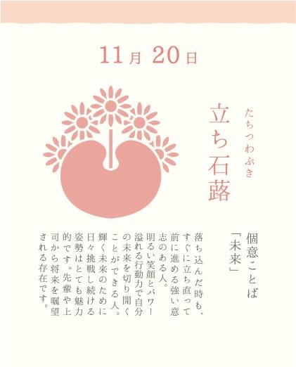 11月20日 立ち石蕗(たちつわぶき)