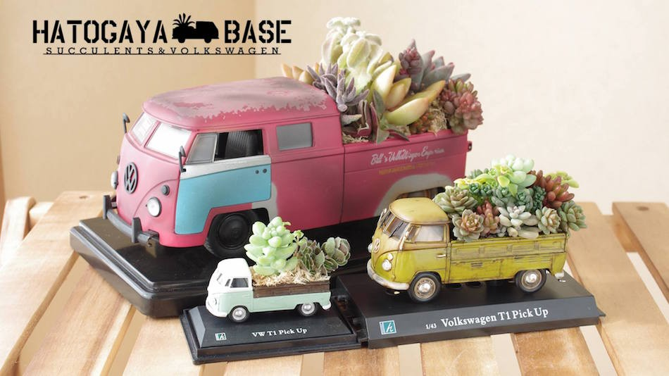 For Succulents and Volkswagen Lovers