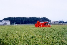 ハトムギの収穫風景