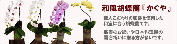 和風胡蝶蘭