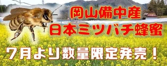 今話題のスーパーフード!様々なタイプの菊