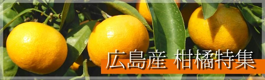 広島産柑橘特集