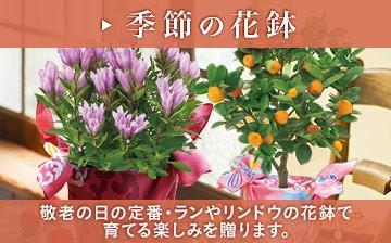 敬老の日 季節の花鉢