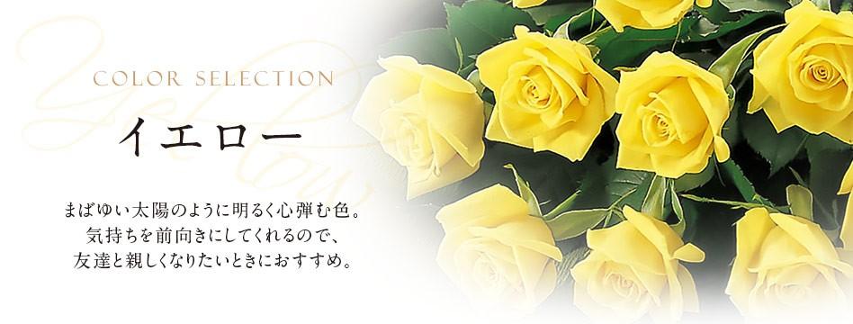色で選ぶ 黄・イエロー
