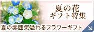 夏の花特集