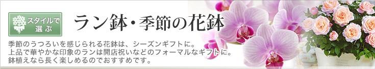 ラン鉢・季節の花鉢