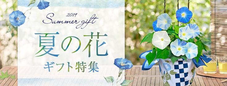 夏の花ギフト特集
