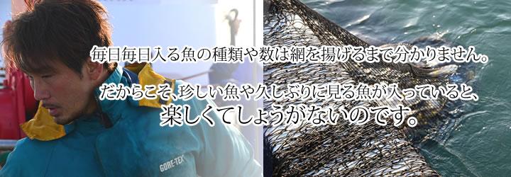 毎日毎日入る魚の種類や数は網を上げるまでわかりません。だからこそ、珍しい魚や久しぶりに見る魚が入っていると楽しくてしょうがないのです。