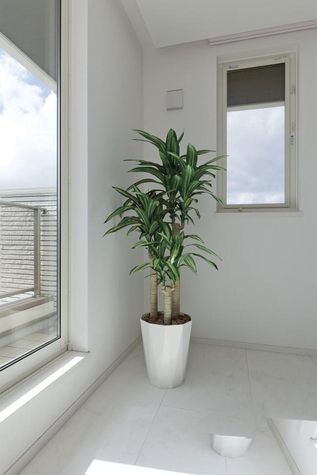 光の楽園 幸福の木 1.6m